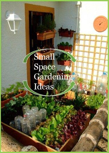 58 best Small Space Garden Ideas images on Pinterest | Gardening ...