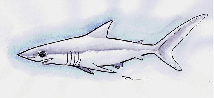 Shortfin Mako Shark by Mathieu-Larno on deviantART