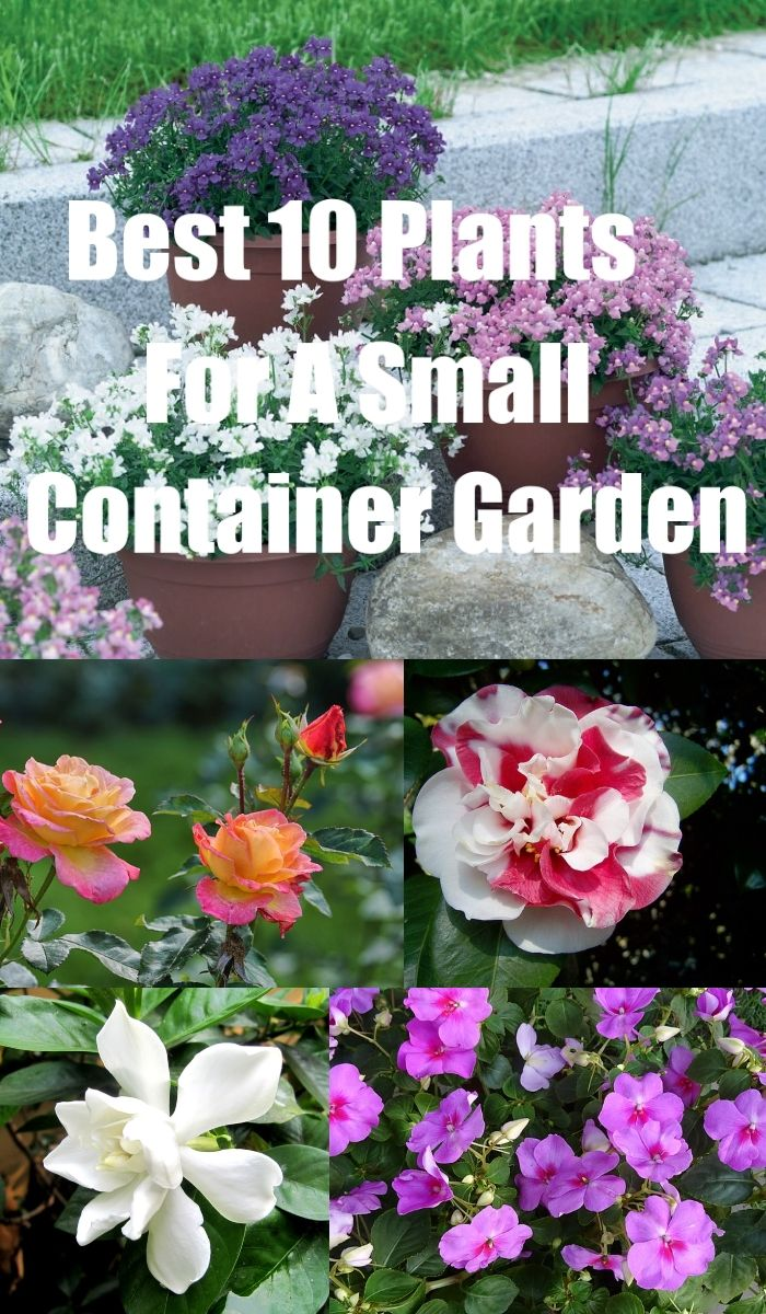Discover The Best Flowers To Use For Container Gardening. These Plants Will  Provide You With A Stunning Pot Or Planter.