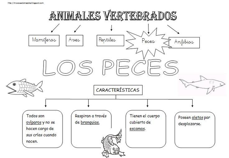 *MIS COSAS DE MAESTRA*: Animales Vertebrados: Esquemas