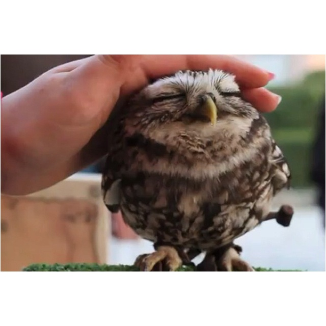 Baby owlLittle Owls, Stuff, Sweets, Baby Owls, Pets, Baby Animal, Adorable, Things, Birds