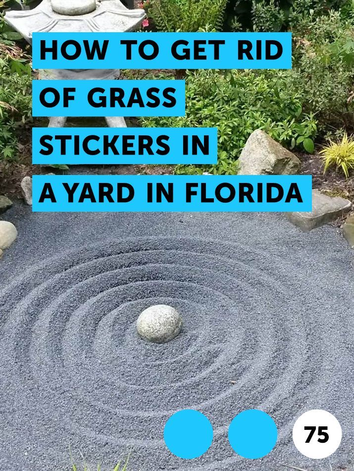 How To Get Rid Of Grass Stickers In A Yard In Florida How To Get