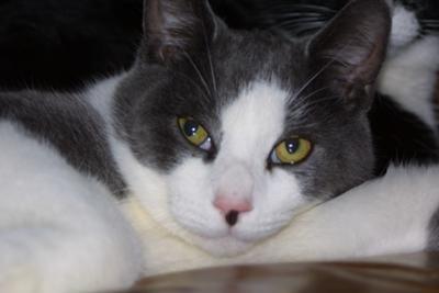Een katten naam uitzoeken is moeilijk, wij helpen je een passende katten naam te kiezen.