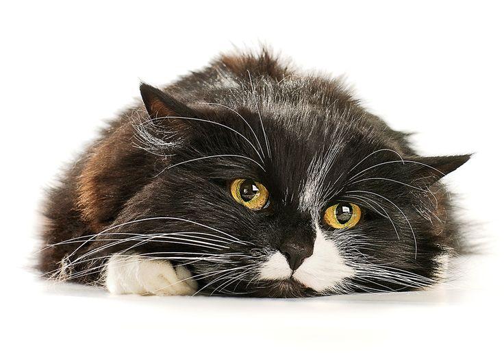 11 sinais de que seu gato pode estar doente