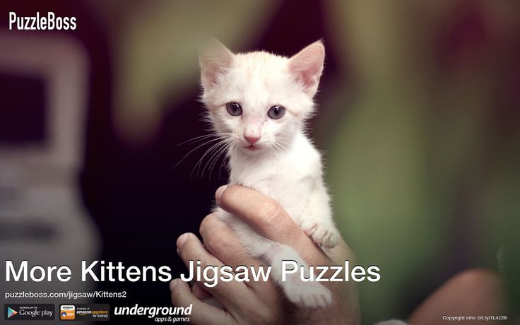 More Kittens Jigsaw Puzzles by PuzzleBoss