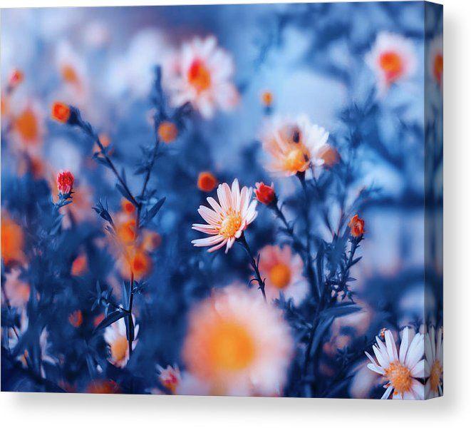 Limited Time Promotion: Orange Flower On Blue Stretched Canvas Print   #fineartamerica #HomeDecor #FineArtPhotography #photography #FineArtPrint #FineArtArtist #PrintsForSale #art #artforsale #inspiration #ArtForHome #creative #OksanaAriskina #oksana_fineart    #blue #orange #wallart #buyart #buyartonline #promotion #sale #home #decor#Flowers #nature www.oksana-ariskina.pixels.com @pixels @fineartamerica