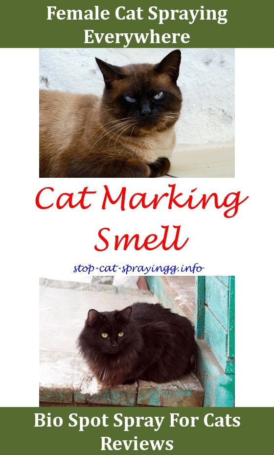Cat Spray How To Get Rid Two Male Cats Sprayingcat Spraying Baking