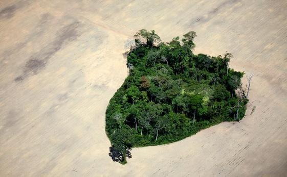 A sud di Itaituba, Brasile, uno scampolo di foresta pluviale circondato da piantagioni di soia.