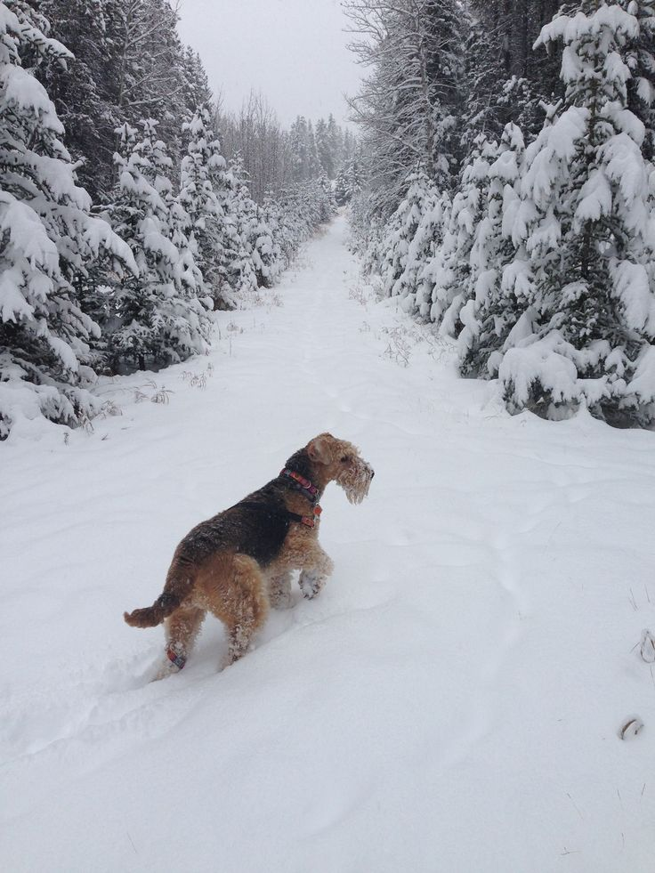 Bella enjoying Banff
