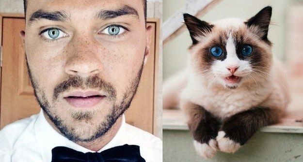 Jesse Williams Vs. Cat | 31 Cats Who Look Just Like Celebrities