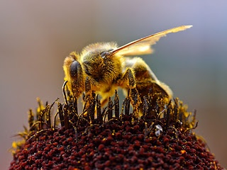 In later historical time periods, an equally consuming hot spot of Bee Worship can be found further north, in Europe, where Bees were worshiped in Scandinavia, throughout Eastern Europe, Germany, Russia and the British Isles.