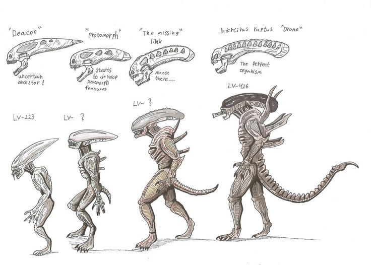 Aliens: Xenomorph Evolution by hellraptor.deviantart.com