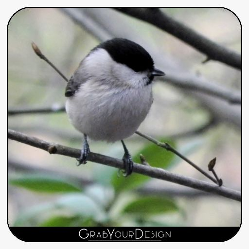 6 Square Coasters - Marsh tit - by PINO