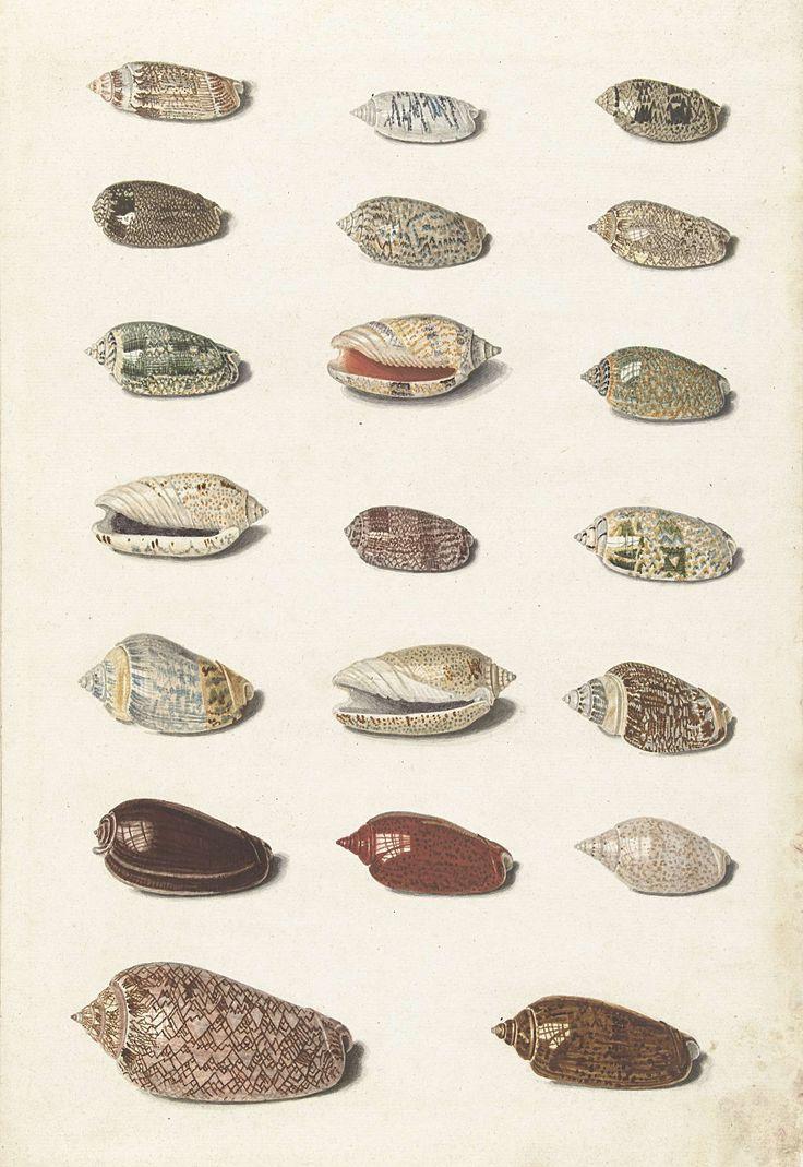 Twintig tropische schelpen, Johann Gustav Hoch, 1726 - 1779