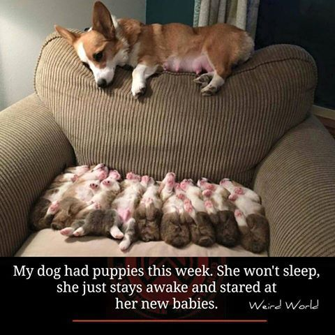Such a good momma. Not my dogs, lol