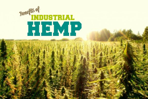 how to get a hemp growing license