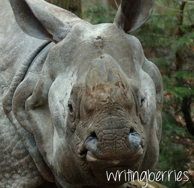 Happy International Rhino Day!  Did you know the rhino horn is made of keratin? Yes that's right. That is the same stuff your hair and nails are made from. Are they magical? Do they possess any medicinal powers? Nope is the right answer here. So why should a Rhino horn be magical? Stop the Trade. Stop Wildlife crime, before its too late!  (Dutch blog: http://writingberries.blogspot.nl/2013/09/22-september-wereld-neushoorn-dag.html)