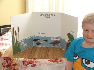 Life cycle of frog - Idea for Noah's 2nd Gr Science Project