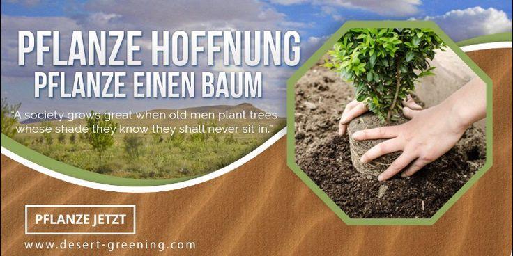 baumpatenschafte in der w ste pflanze hoffnung pflanze einen baum integrale umweltheilung. Black Bedroom Furniture Sets. Home Design Ideas