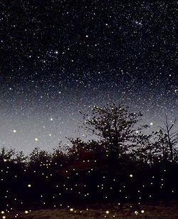 I've seen fireflies!  The only good thing about El Salvador