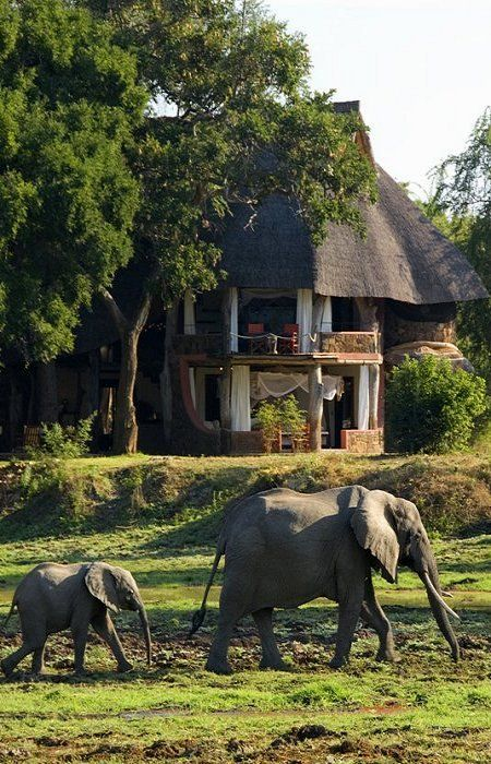 Zambia, Africa Elephants in my front yard... no big deal.