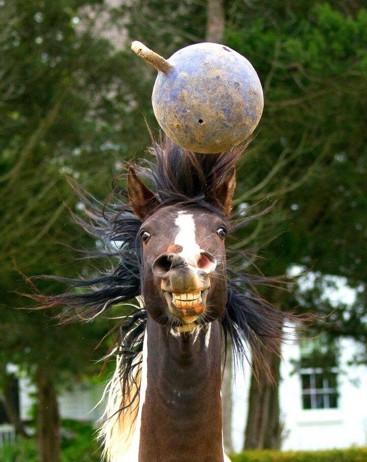 """""""BALL!!!!! But first, lemme take a selfie."""" #HorsinAround"""