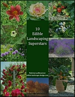 gardening in the shade can be a challenge learn how to set up edible shade - Plants That Do Well In Shade