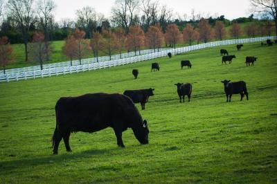Kentucky Grazing Conference to focus on pasture health | UK College of Agriculture News