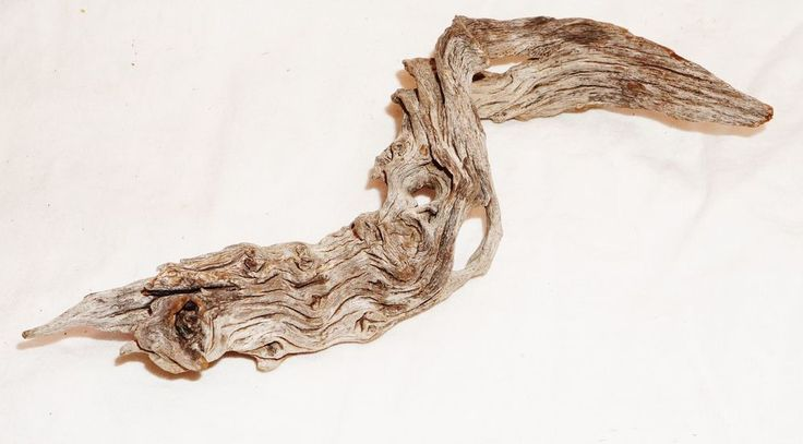 """Western Texas Dried Stumpage Root Natural  Sculpture Approx 7.5""""x 2.5"""" #Unbranded"""