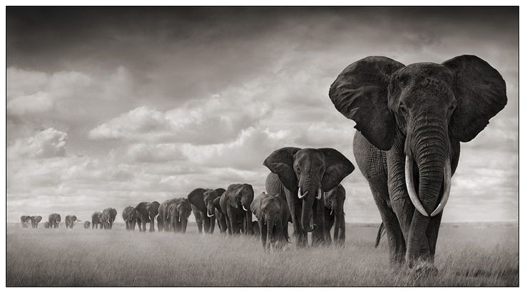 Nick Brandt elephants 4