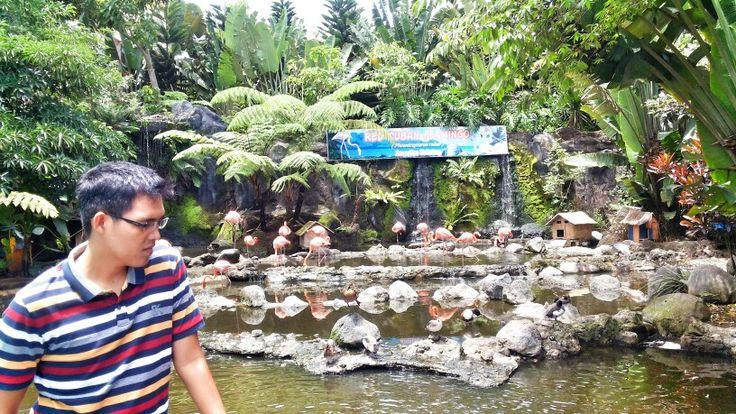 Bangau-bangau berwarna pink ini ada di Batu Secret Zoo... salah satu kebun binatanf terbaik yang ada di Indonesia... #batu #zoo #animal #holiday