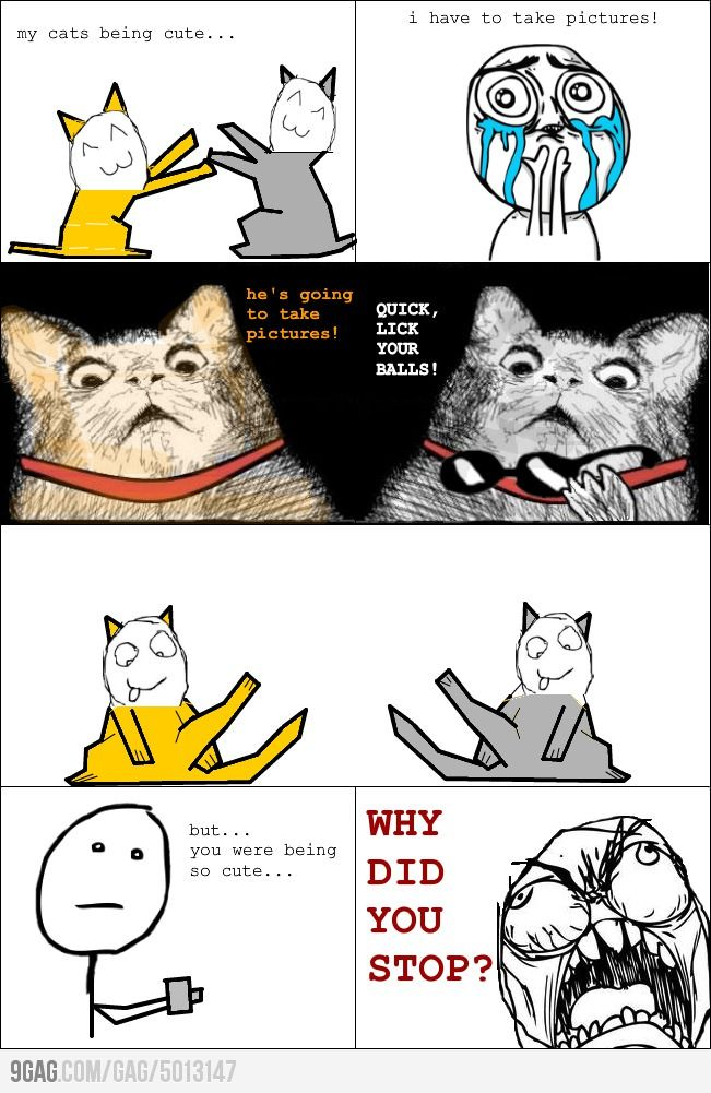 Taking picture of cats funny meme   #funny #meme #memes #lol #rofl #ragecomic | Funny memes and pics