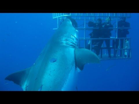 UNSEEN footage of what experts believe is the biggest great white shark ever caught on camera has been released. The seven metre-long female known as Deep Blue stunned the world last year when video was unveiled of it dwarfing cage divers off the coast of Guadalupe Island, Mexico.