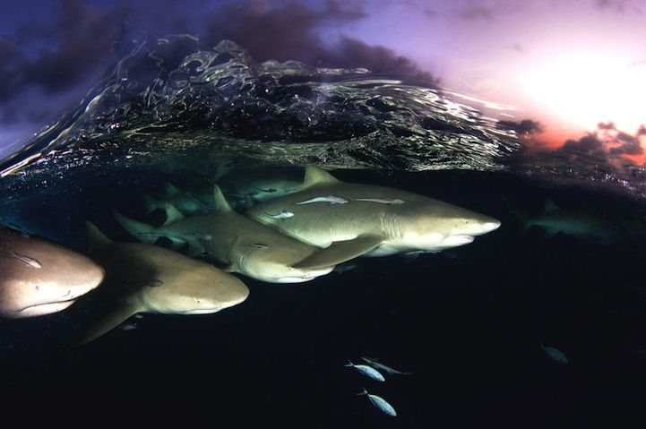 Stunning Moments of Life Under the Sea - by David Doubilet