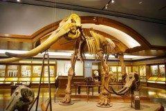 本日リニューアルオープン 滋賀県草津市の湖をテーマにしたミュージアム県立琵琶湖博物館  湖の淡水魚や歴史琵琶湖と人間との関わりについて学ぶことができます  その昔琵琶湖は滋賀県にはなく三重県の上野盆地にあったそうです 琵琶湖は400万年かけてゆっくりと北に移動してきたのです そして250万年180万年前にはなんとゾウの祖先も棲んでいたそうですよ  tags[滋賀県]