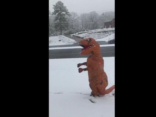 WATCH:  T-Rex enjoys first day of snow  Christi Boston Henderson of Vestavia Hills, Alabama, rarely sees snow. So after a few inches of snow fell Friday, she put on a T-Rex costume and enjoyed herself thoroughly.  ------------------------------ #news #buzzvero #events #lastminute #reuters #cnn #abcnews #bbc #foxnews #localnews #nationalnews #worldnews #новости #newspaper #noticias