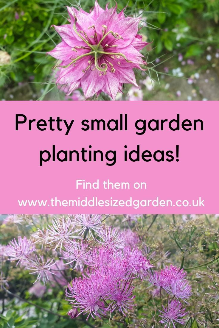10 Small Garden Planting Ideas That Really Work In 2020 With