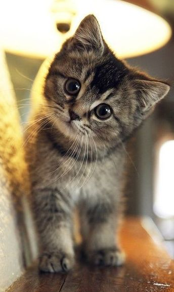 Super cute kitten | Crazy cat lady | Pinterest
