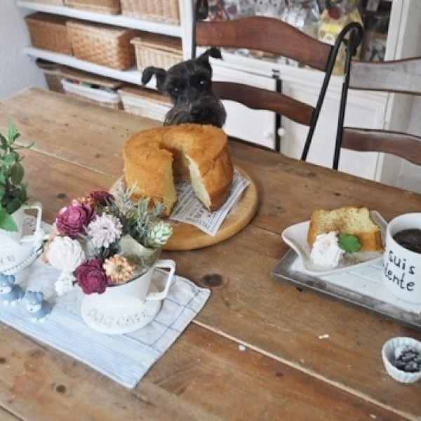 コーヒードリッパーを植木鉢に!多肉、ハーブを植える - 暮らしニスタ