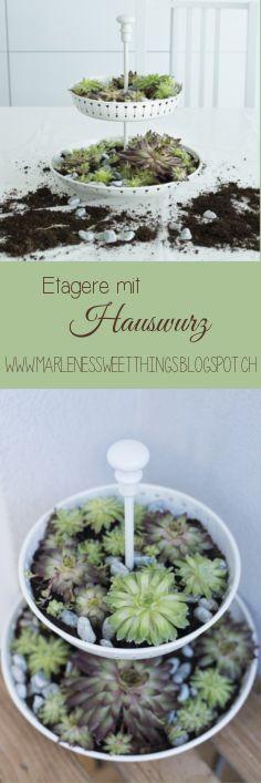 Etagere mit Hauswurz - Etagere with Houseleek