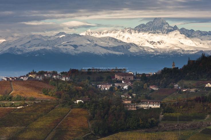 Looking Monforte d'Alba, Piemonte - Italy
