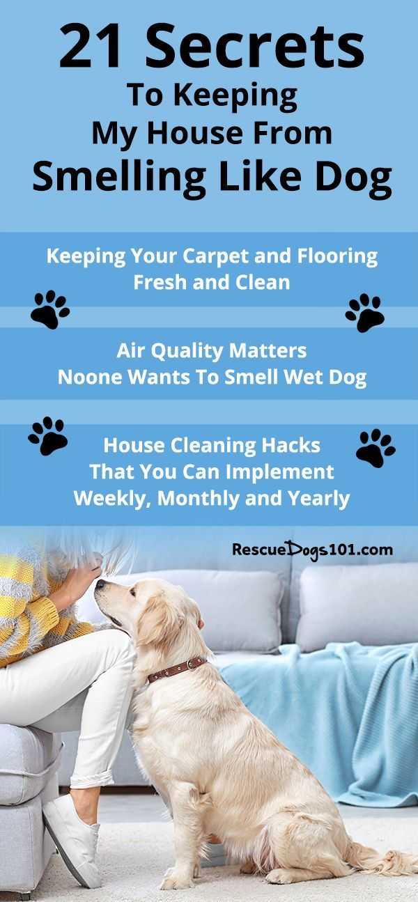21 Secrets To Keeping My House From Smelling Like Dog Dog