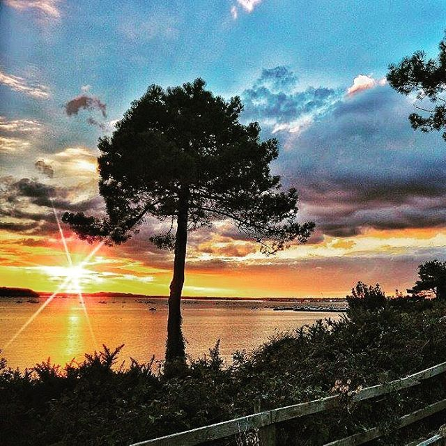 Evening hill in Poole at sunset by Lee Saunders #weatherpictures #autumn #instaautumn #picoftheday #alexisgreen #southtoday #bbcsouthtoday #bbcnews You can send your weather pictures to us via southweather@bbc.co.uk and view the full gallery at www.facebook.com/BBCSouthToday #poole #dorset #pooleharbour #sunset