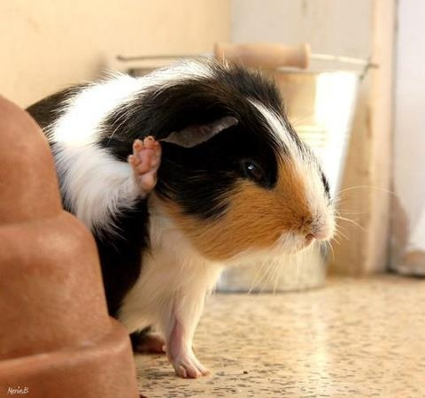 Talk to the paw, the pig ain't listening!
