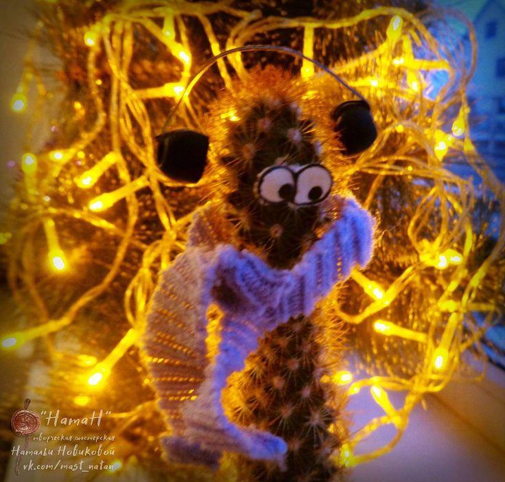Кактус Геннадий настоятельно рекомендует настраиваться на праздники!  _____________  #кактусГеннадий #понедельниксГеннадием #cactus #cactusGennady #ёлочкагори