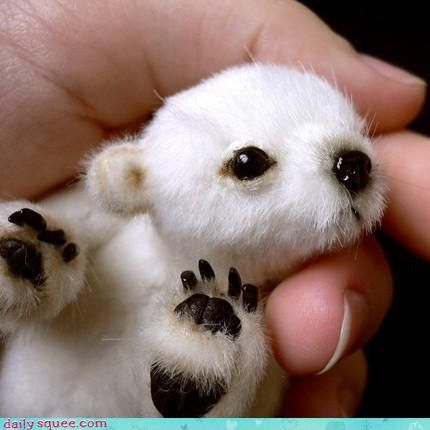 baby polar bear... they should use these types for pic's for conservation posters, if you want to save them