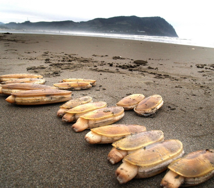 17 Best Images About Clam Digging On Pinterest
