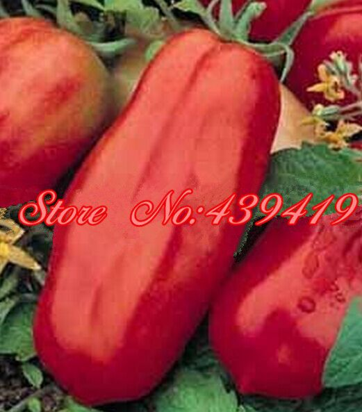 200/ bag giant big Tomato Seeds -San Marzano tomato, Heirloom Open Pollinated vegetable seeds, superior taste, for home planting #clothing,#shoes,#jewelry,#women,#men,#hats,#watches,#belts,#fashion,#style