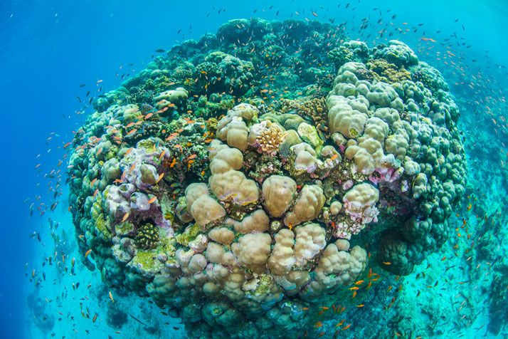 pretty places to go and there names | To Experience The Exciting Stay at The Underwater Hotel | Traveleggo so pretty love nature and wildlife and oceans