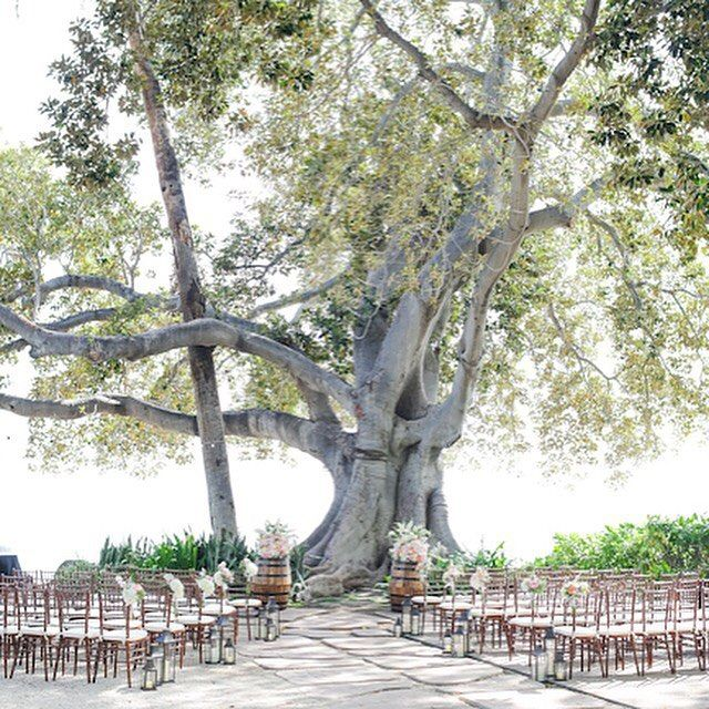 An amazing day for a wedding under the kissing tree at the Olowalu Plantation House!! Rentals by @hawaiianrents image by Love and Water Photo for Maui's Angels Weddings!!